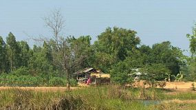 A lonely hut is sheltered by large trees on farmland in rural Thailand.