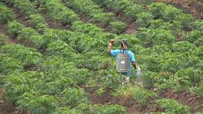 An Asian farmer sprays his Cassava crop with chemicals in Western Thailand.