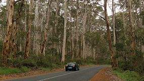 A car driving along a road going through the middle of jarrah trees in the Boranup Forest in South Western Australia.