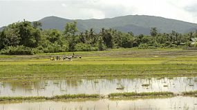 Farmers planting rice by transplanting rice seedlings in Northern Thailand, with the view of mountains in the background and water flooded paddies in the foreground.