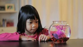 A cute little 5 year old Asian girl feeds her pretty Betta fish.
