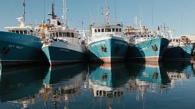 Row of boats docked close together in Fremantle Fishing Boat Harbour, in Western Australia.