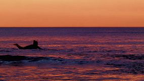 Silhouette of a woman paddling out to catch a wave at South Cottesloe Beach in Western Australia, as the sun sets in the background.