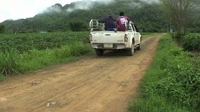A pick up truck carrying Asian farmers passes by a cassava field in Western Thailand.