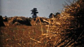 Farmers Fields And Golden Wheat In The Fall-1940 Vintage 8mm Film