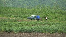 An Asian cassava farmer heads back to his pick up truck after a hard days work in the field in Western Thailand.