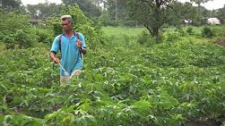 A right to left pan shot of an Asian farmer as he sprays his cassava field in Western Thailand.
