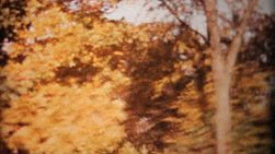 A shot of colorful autumn leaves in the fall of 1964.