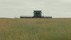 A header coming towards the camera while swathing a crop of canola on an Australian farm.