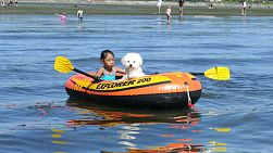A cute little Asian girl and her faithful furry Bichon Frise puppy enjoy paddling their boat in the ocean on a summer day!
