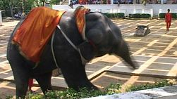 An elephant dancing like crazy during a performance in Bangkok, Thailand.