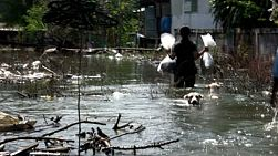 A Thai man grabs a dog by the scruff of his neck in order to help him navigate the flooded waters of Bangkok, Thailand.