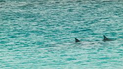 A pod of dolphins swimming nearby, in the Cape Le Grand National Park near Esperance, Western Australia.