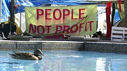 A group of protesters camp out in the city of Vancouver to demonstrate for their cause as a colorful Mallard duck swims by casually.