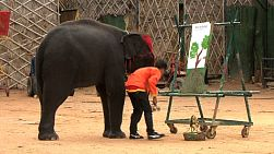 A cute baby elephant paints a lovely picture on a canvas using a brush held by its trunk.