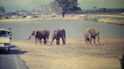 Elephants roam wild in a game park in Caracas, Venezuela in 1979.