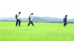 CHIANG RAI, THAILAND, SEPTEMBER 2013:  A group of high school aged Asian students playing around in a rice field on the way to school in Chiang Rai, Thailand.