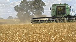 An Australian farmer on a combine harvester (header) harvesting a crop of oats. crane/tracking shot.