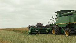 A combine harvester passing and driving away while swathing a crop of canola on an Australian farm.
