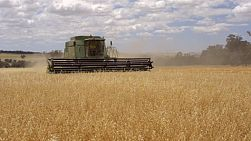 A farmer on a combine harvester (header) harvesting a crop of oats.