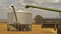 A header offloading a load of oats into a field bin on an Australian farm.