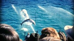 Adorable dolphins put on an amazing show for the tourists at Marine land in 1967.