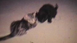 Kittens Playing In The Living Room On The Carpet. (1968 - Vintage 8mm film footage)