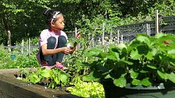 A cute little 9 year old Asian girl enjoys tending to her new garden in the summer.