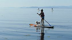 A cute 12 year old Asian girl enjoys paddleboarding with her adorable Bichon Frise puppy on a gorgeous summer day in Qualicum Beach, BC.