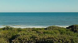 Looking across a dune covered in bushes and plants, to the clear waters and horizon of the ocean.