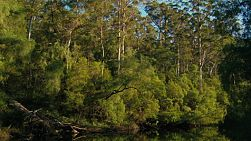 Lush  vegetation overhanging a river in the Gloucester National Park, near Pemberton, Western Australia.