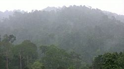 A zoom out shot of monsoon rains falling in the jungle near Chantaburi, Thailand.