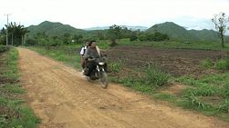 A motorcycle passes by on a dirt road beside a large cassava field in Western Thailand.