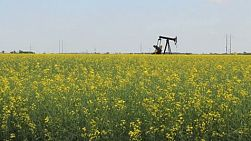 A lonely oil pump faithfully pumps oil in the middle of a ripe canola crop in the Canadian prairies.