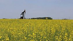 A lonely oil pump stands in a canola field pumping oil on the Canadian prairies.