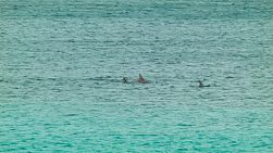 A pod of dolphins swimming by, in the Cape Le Grand National Park near Esperance, Western Australia.