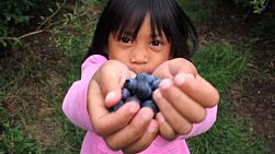 A cute little Asian girl shows off her delicious fresh blueberries she just picked.