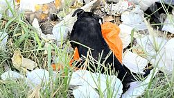 Stray puppy forages for food in a pile of garbage, in Bangkok, Thailand.