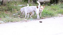 Soi dogs (street dogs) on the side of a road in Bangkok, Thailand.