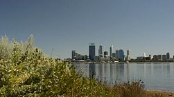 Tracking shot revealing the view of Perth City, from behind some native bushes, across the Swan River. Perth is the capital of Western Australia.