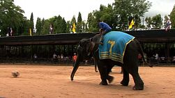 Two elephants compete in a soccer ball kicking event in an outdoor cultural show in Pattaya, Thailand.