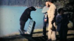 Two men feed hungry bear cubs at Lake Louise, near Banff, Alberta in 1958.