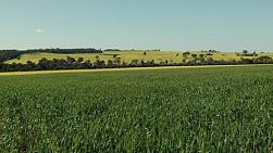 Landscape of wheat and canola crops on a farm in Western Australia.