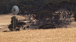 Windmill in a paddock of golden wheat on an Australian farm.