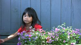 A cute little Asian girl waters her pretty flowers in the spring.