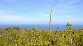Australian native plants, including a grasstree (balga) on Cape Naturaliste, overlooking the Indian Ocean.