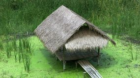 A lovely grass hut made of bamboo situated over a little swamp in Thailand.