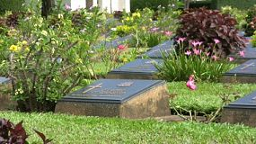 "A zoom out shot of gravestone markers of the men and women that died working on the ""Death Railway"" during World War II in Thailand."