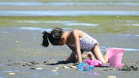 A cute little Asian girl enjoys spending time playing at the beach on a gorgeous sunny summer day.