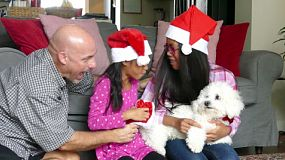 Two cute Asian sisters are excited to get a white furry Bichon Frise puppy for Christmas from their Daddy.